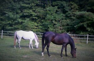 Two horses Emmari And Pippa grazing