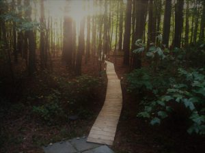Wooden path leading into the woods